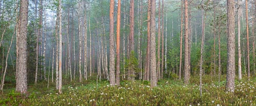 forest finland