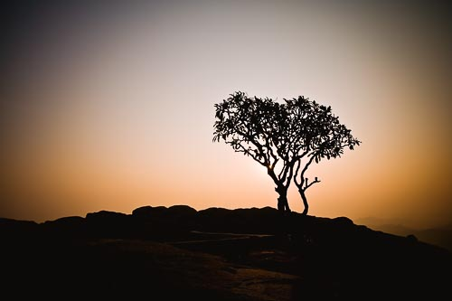 sunrise tree silhouette